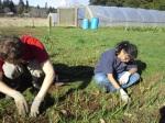 Volunteering at Zenger Farms